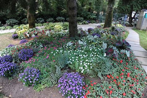partial shade plants front garden ideas