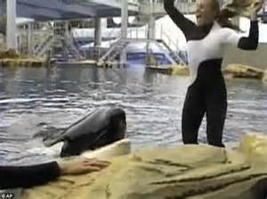 Seaworld Orca Shows To Resume Just