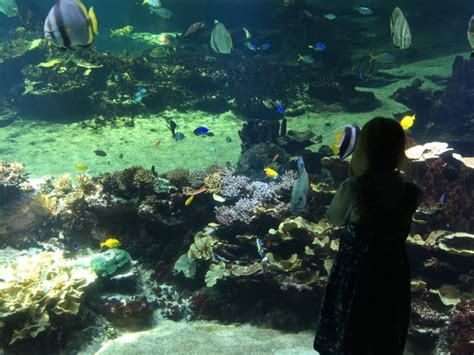 diving into the at nausicaā aquarium boulogne sur mer globalmouse travels
