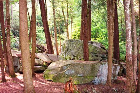 forest in usa file forest swallow falls md usa jpg wikimedia commons