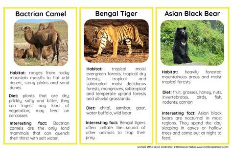 animals  asia nomenclature  information cards