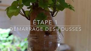 Patate Douce Plante : comment cultiver la patate douce youtube ~ Dode.kayakingforconservation.com Idées de Décoration