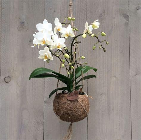 orchid arrangements poeldijk in zuid kokodama string garden