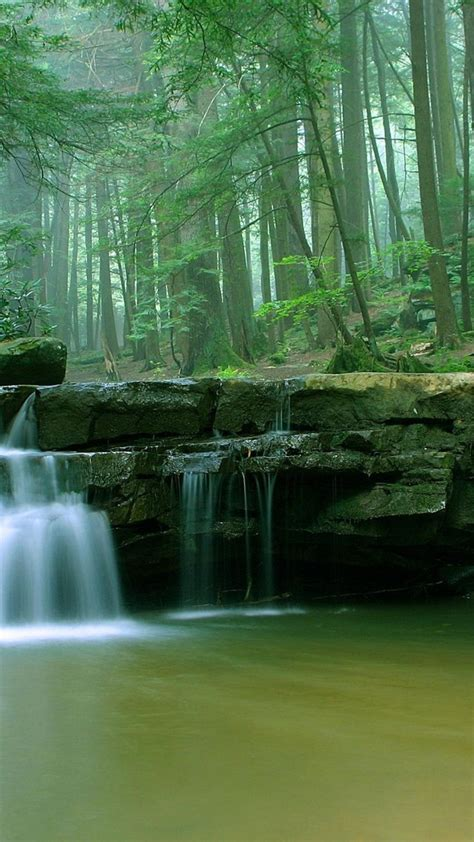 forests green landscapes maryland nature wallpaper