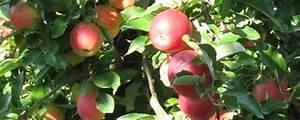 äpfel Pflücken Berlin : pfel selber pfl cken empfehlungsportal ytti ~ Lizthompson.info Haus und Dekorationen