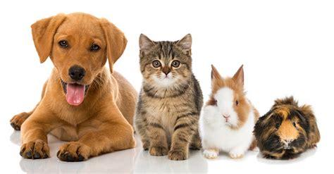 Wie Viel Kostet Eine Maus Als Haustier by Haustiere Kaufen Was Vor Dem Kauf Wissen Sollte