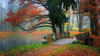 Tablet Wallpapers Landscape Autumn Tree Bridge Beauty