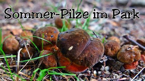 Pilze Im Gartenrasen by Sommer Pilze Im Park Pilze Suchen Mitte Juli 2017