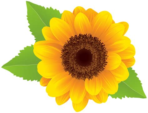 sunflower png clip art image gallery yopriceville high quality