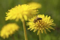 Flecken Auf Kleidung Entfernen : gelbe flecken auf wei er kleidung entfernen ma nahmenkatalog ~ Markanthonyermac.com Haus und Dekorationen