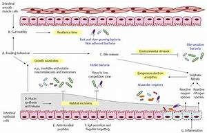 Mechanistic links between gut microbial community dynamics ...