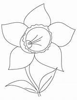 Daffodil Coloring Bulb Printable Getdrawings Getcolorings sketch template