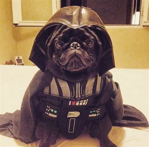 galactic dog parades pug costumes