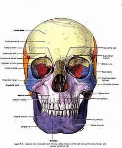 Nurse 1215 Study Guide  2013-14 Whitlatch