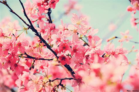 Pretty tumblr flowers castrophotos flowersfloral tumblr mightylinksfo