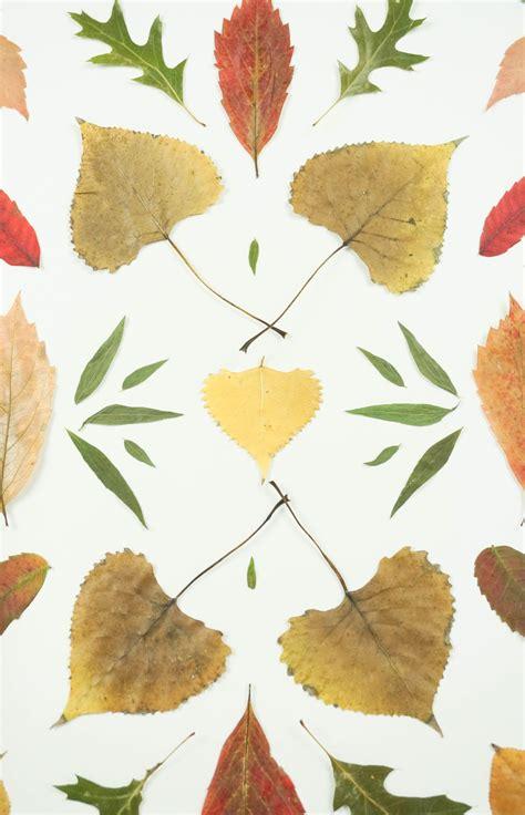 autumn pressed leaf art