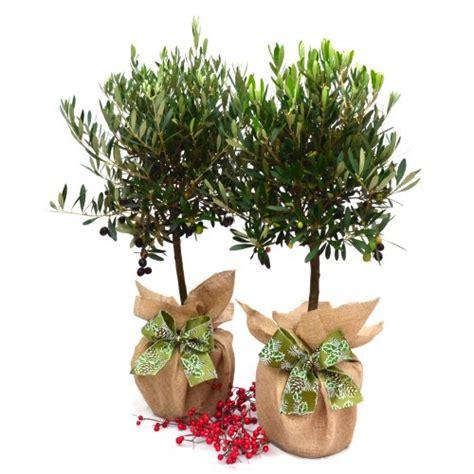 fiori domicilio roma consegna piante domicilio consegna piante a domicilio