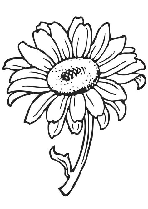 coloring pages  sunflowers coloring home