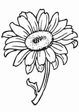 Sunflower Coloring Pages Printable Flower sketch template