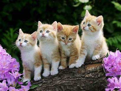 Cats Kittens Animals Wallpapers 1600 1200