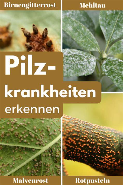Pflanzen Im Garten Erkennen by Pilzkrankheiten Garten Garten Ideen Garten Und Garten