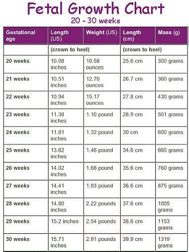 Janin 33 Minggu Berat Janin 700 Gram Di Usia Kehamilan 6 Bulan Tanya