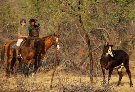 horseback safari safaris horse african africa south wilderness wild game ridges ant limpopo province bush getaway