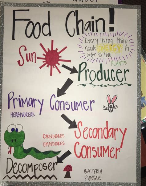 anchor chart  food chain  grade food chain