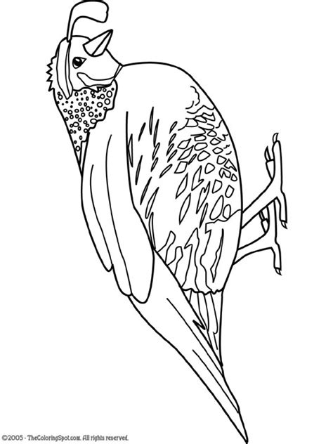 Coloring Quail by Quail Coloring Pages For Preschool Preschool And