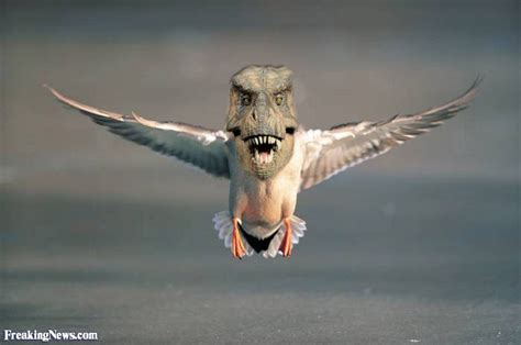 Dino Birds Pictures Gallery