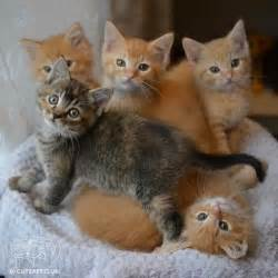 baby cats for best 25 baby kittens ideas on baby