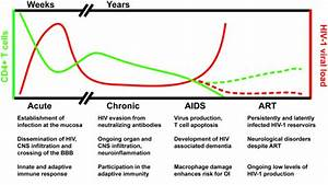 Role Of Macrophages In Hiv