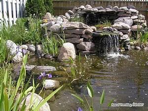 Basssin d39eau guide pour construire un bassin d39eau pas for Plan de bassin de jardin 6 le jardin jardins de la ferme bleue