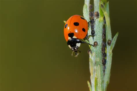 micro photography  ladybird  green leaf plant hd