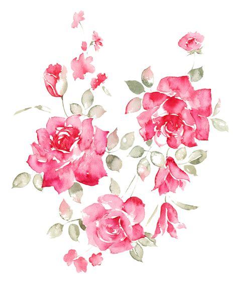 peony clipart peony clipart botanical illustration peony botanical