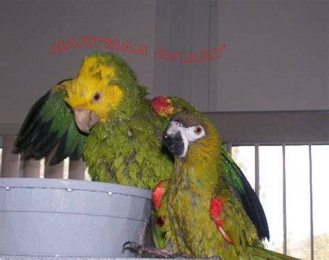 Bathtub Refinishing In Austin Minnesota 100 bodies hit the floor parrot parrots know your