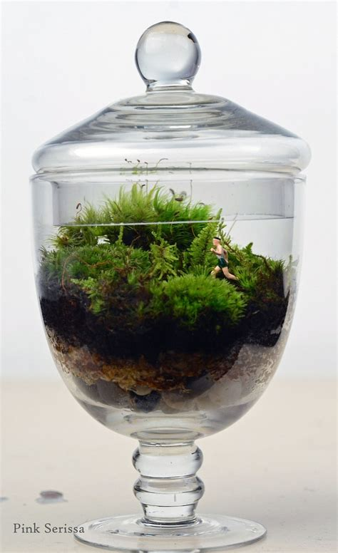 moss in glass jar moss terrarium little people jogger apothecary jar glass planter living home decor