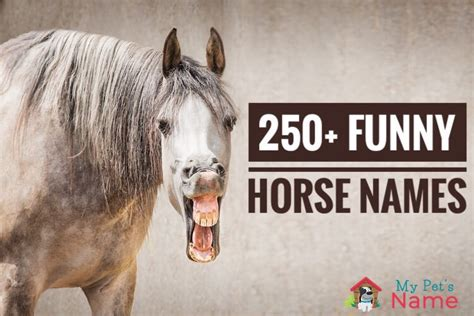 names horse funny looking hay pet fever mane attraction
