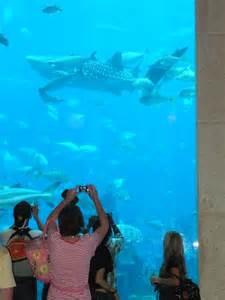 chambre aquarium atlantis hotel aquarium dubai 28 images atlantis the