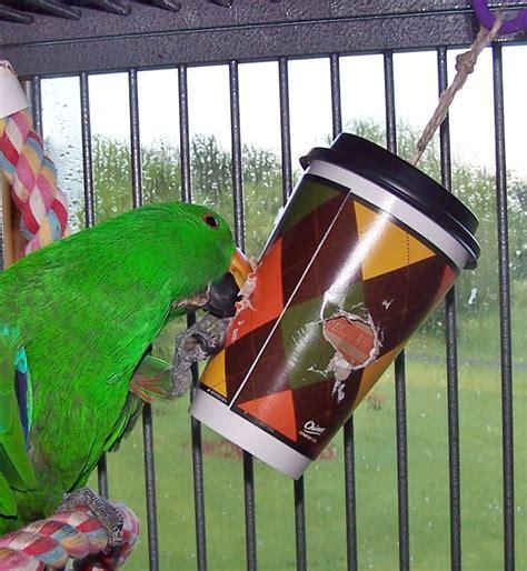parrot enrichment blog helping people enrich