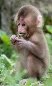 Best Cute Baby Monkeys Ideas And Images On Bing Find What You Ll
