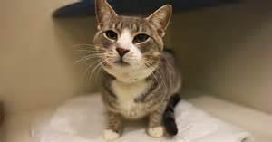 adopt cat nyc davidson aspca