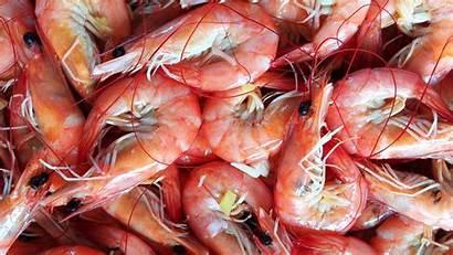 Shrimp Boiled Fondos Pantalla Camarones Cocidos Frozen