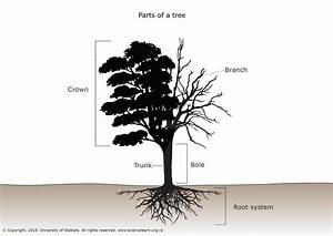Parts Of A Tree  U2014 Science Learning Hub