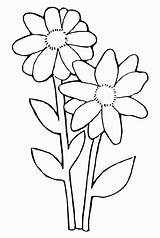 Coloring Daisy Template Flower Petal Cliparts Popular sketch template
