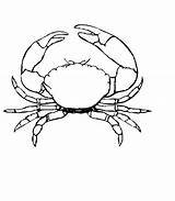 Crab Coloring Pages Drawing Stone Outline Printable Crabs Simple Colouring Animals Template Animal Drawings Fun Fish Sketch Sea Animalplace Print sketch template