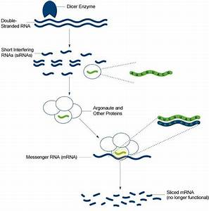 Field Focus: Progress in RNA Interference Research ...