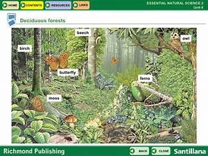 Deciduous Forest Ecosystem Animals 63589 | NOTEFOLIO