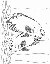 Fish Coloring Pages Aquarium Printable Tropical Oscar Sheet Oscars Oasis Colouring Realistic Sheets Tank Easy Young Kidscp Printables Animal Swordfish sketch template