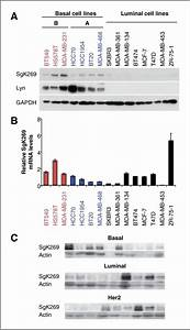 Involvement Of Lyn And The Atypical Kinase Sgk269  Peak1 In